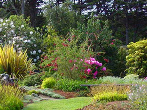 photo of the Mendocino coast Botanical Gardens.