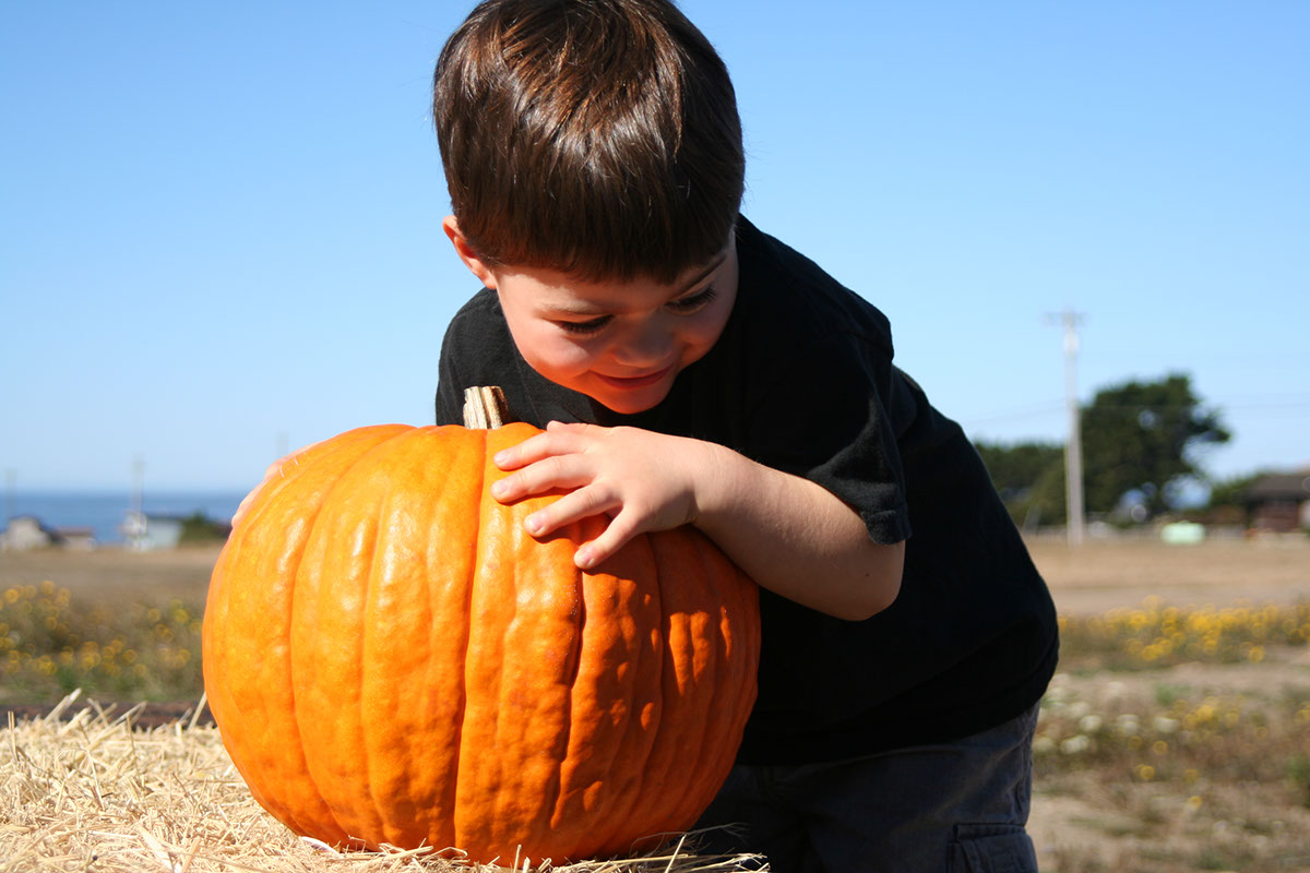 photo shows a young boy holding a large pumpkin at the North Spur pumpkin patch.