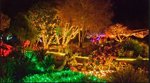 photo of the Festival of Lights at the Mendocino Coast Botanical Garden. Magical Wonderland.